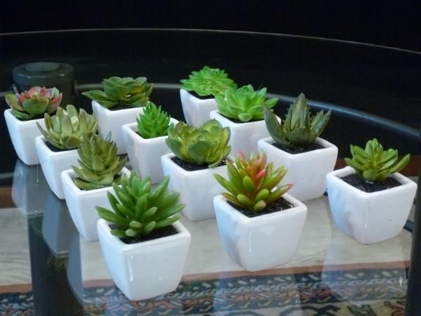 Todo flor - Cactus en macetas pequenas ...